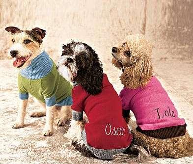 moda tambien para tus mascotas